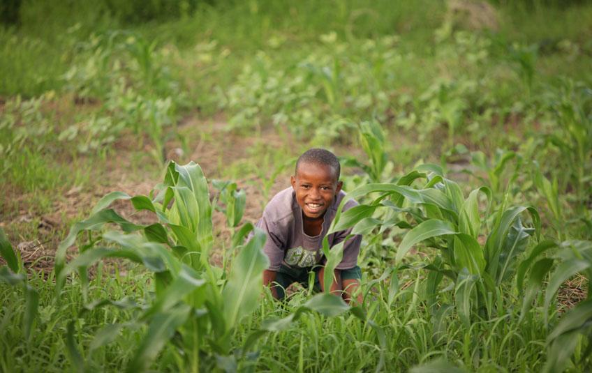 a boy crouching in a corn fiel