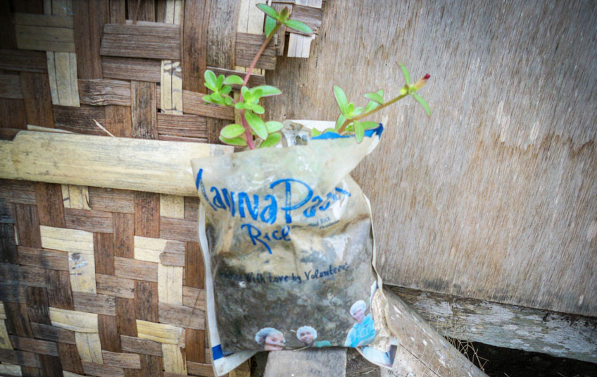 a sapling growing out of an FMSC food bag