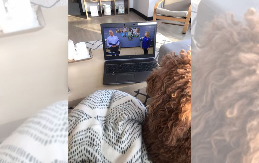 The back of a dog's head watching FMSC's virtual gala
