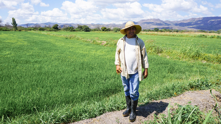 A farmer stands in front of his field of rice, which is used in FMSC's GlobalPack meals